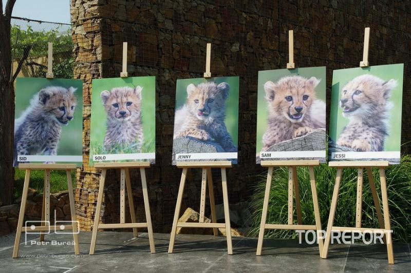 Gepardní paterčata