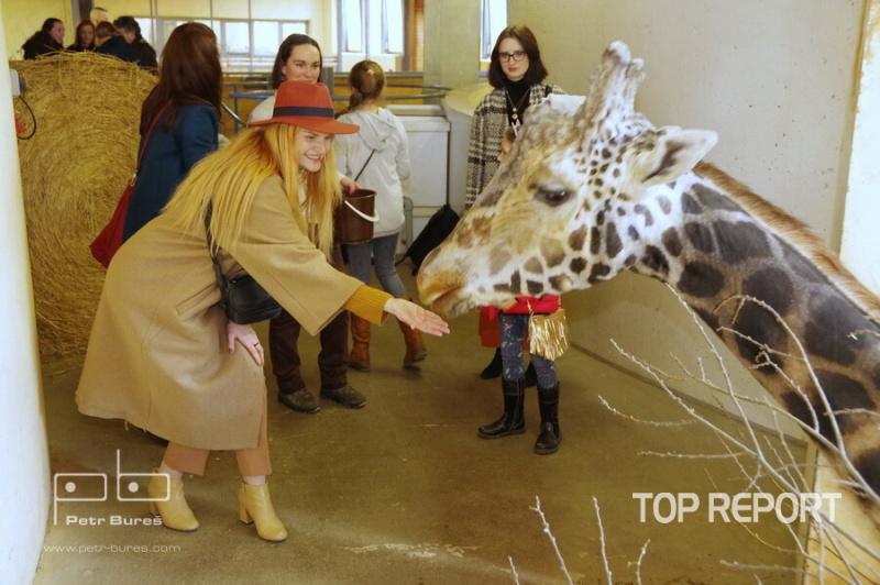 Iva Pazderková u samce žirafy severní núbijské Johana