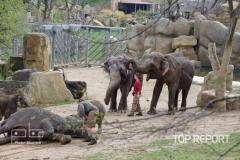 Pražské sloní stádo slonů indických 01